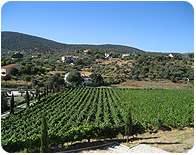Viña Placentina. Shopping Cart. Wines from organic farming. Extremadura (Spain). Wine Shop online