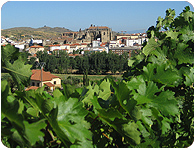 Viña Placentina. Contact. Wines from organic farming. Extremadura (Spain). Wine Shop online